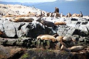 Isla de Lobos Ushuaia, canal Beagle