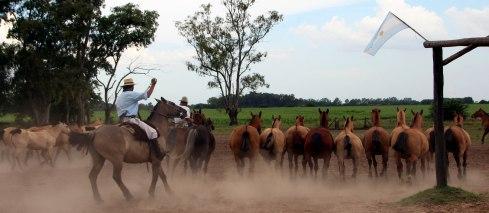 Panoramica Estancia Santa Susana, espectaculo de caballos