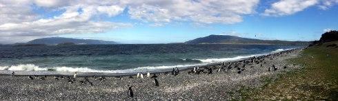 panoramica pinguinera ushuaia