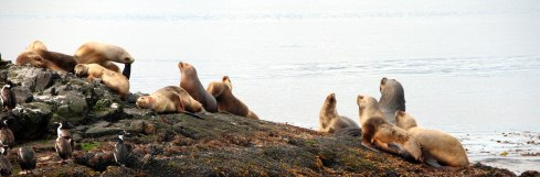 Panorámica Isla de Lobos