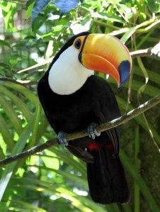 Parque de las aves, iguzau, tucán