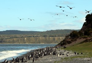 Pingüinos y aves, isla pingüinera