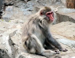 makako, zoo ueno, tokio