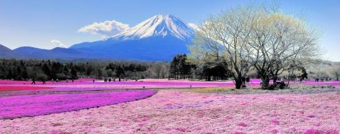 flores y Monte Fuji