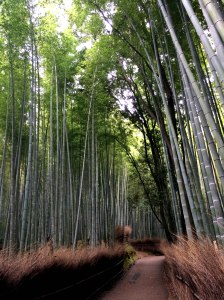 bosque de bambú, Arashiyama 2