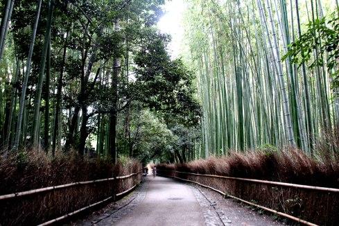 bosque de bambú, Arashiyama