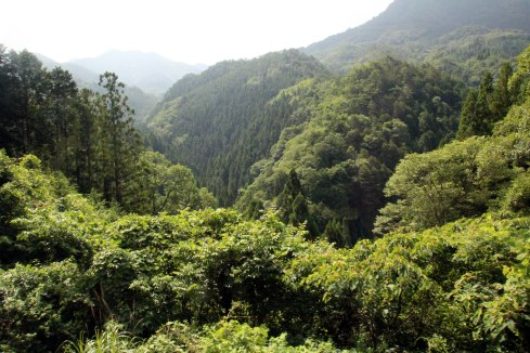 vistas subida Koyasan