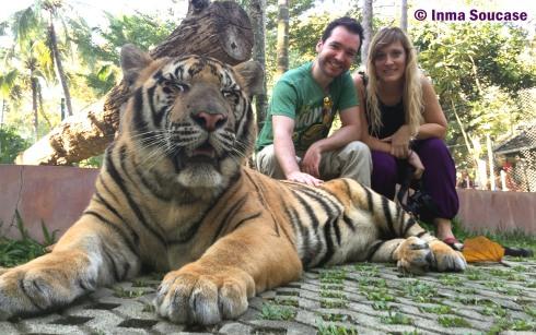 Tiger Kingdom - con el tigre grande 2