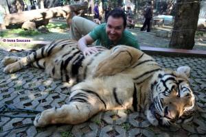 Tiger Kingdom - grande