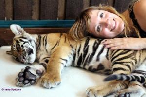 Tiger Kingdom - pequeño