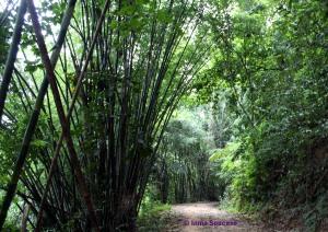 parque nacional Khao sok - camino trekking jungla