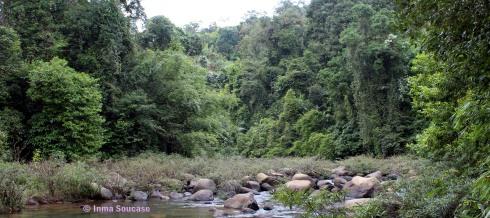 parque nacional Khao sok - naturaleza rio